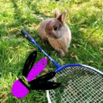 lapin raquette stage obc orvault